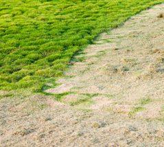Southern Greenscapes Landscape Design & Construction   Rock Hill, SC   lawn